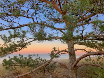Wrażenia - Spaceruj nad morzem w piękny letni dzień. Drzewo obok akwenu.