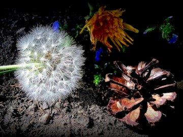 Λουλούδια, τον Μάιο, - Λουλούδια, τον Μάιο, τη φύση, τις ακτίνες,. Στενός επάνω