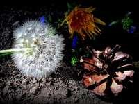 Flores, May, - Flores, maio, natureza, raios,. Um close-up de uma planta.