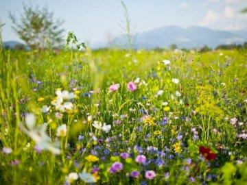 Na łące - łąka, kwiaty, rośliny, maki, chabry. Zakończenie up kwiatu ogród.