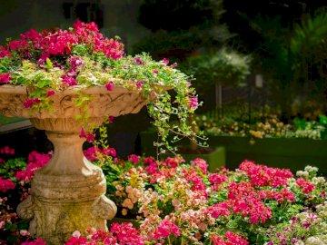 ogród pełen kwiatów - -----------------------------------. Kolorowy ogród kwiatowy.