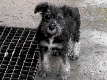 Mała Żelka - Mój czworonożny przyjaciel. Brązowo-biały pies na smyczy.