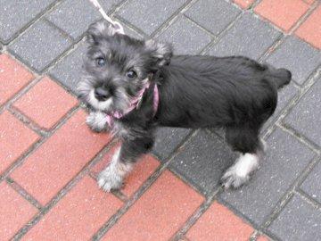 Jelly on a walk - my four-legged friend. A small dog on a leash.