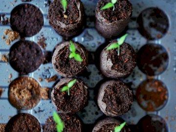 Dans des moments comme celui-ci, faites-le - Plante verte sur sol noir. L'Autriche. De nombreux types de beignets différents.