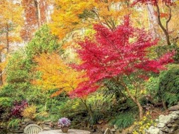 Autumn colors. - Landscape puzzle: fall colors. An empty park bench next to a tree.