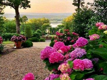 Krajobraz z hortensjami. - Układanka: krajobraz z hortensjami. Różowy kwiat jest w ogrodzie.
