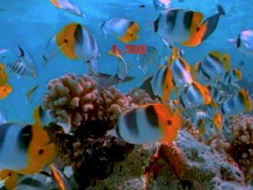 ryby morskie - scena życia w morskim świecie, eksplozja kolorów. Grupa ryb w wodzie.