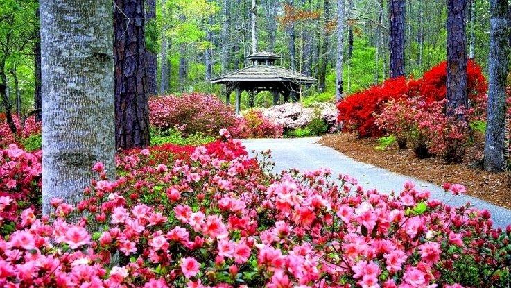 Беседка сред дърветата - Беседка сред дървета, парк, цветя. Розово цвете е в градина с Callaway Gardens на заден план (10×8)