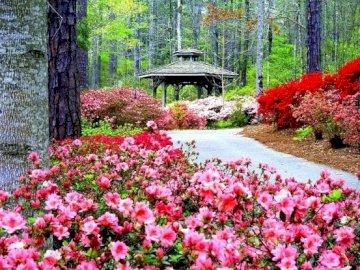 Pergolato tra gli alberi - Pergola tra alberi, parco, fiori. Un fiore rosa è in un giardino con Callaway Gardens in background