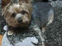 Marie-Do - Kleiner süßer Welpe mit seiner Decke. Eine Gruppe ausgestopfter Tiere sitzt neben einem Hund.