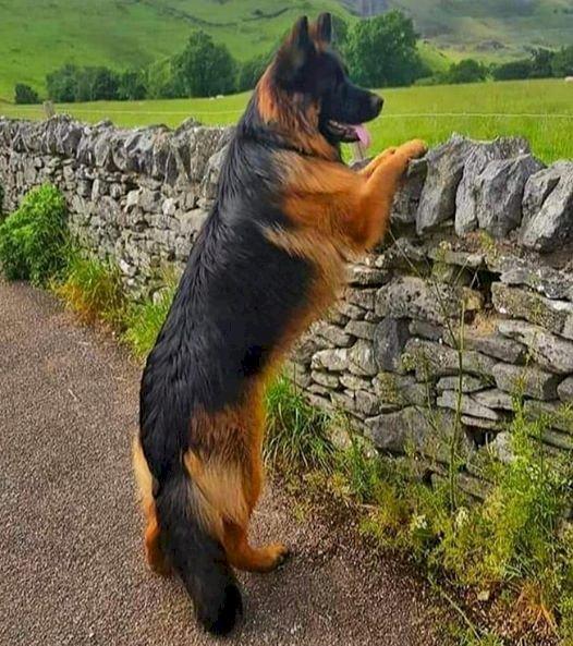 marie-do - Bonito perro esperando el regreso de su amo. Un perro de pie sobre una roca (13×13)