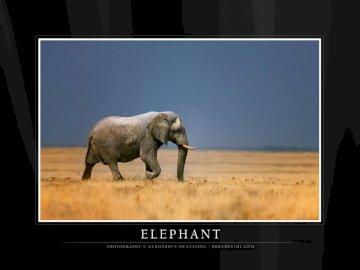 Ελέφαντας  - Devi inseguire un elefante. Un televisore a schermo piatto.