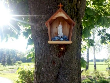 Mary's shrine on the tree - Marian chapel - folk religiosity. A tree in front of a forest.