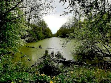 Masurischer Kanal - Der Kanal sollte die Großen Masurischen Seen mit der Ostsee verbinden. Ein Baum in einem Wald.