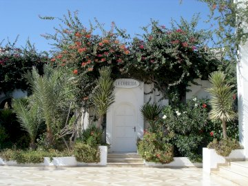 Tunisia ----------- - -----------------------------------. A close up of a flower garden in front of a tree.