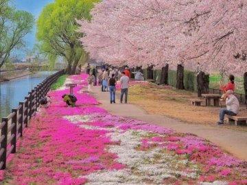 Frühling in Japan - oh oh oh oh oh oh oh oh oh oh oh. Eine Gruppe von Menschen in einem Garten.