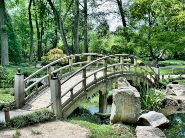 Japanese garden - wooden bridge --------------. A tree in a park.