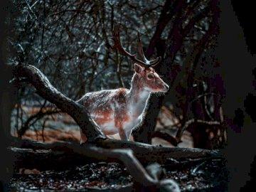 Jeleń na wolności - Brown i białego jelenia pozycja na brązie mlejącym podczas dnia. Amsterdam. Jeleń stojący obok
