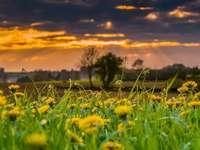 Prado primavera - Paisagem retratando um prado primavera. Uma flor amarela em um campo.