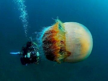 Méduse  - Meduza