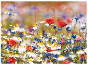in May - cornflowers, poppies and chamomiles.