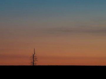 Lonely Tree - Silhouette of bare tree.