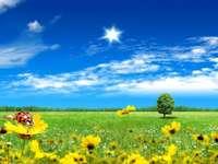 field_flowers_tree_clouds
