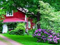 house_garden_yard_flowers_green