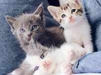Gatito tres