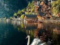 No lago. - Enigma da paisagem: no lago.