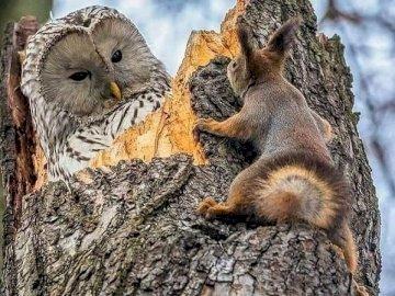 Mamíferos y aves. - Rompecabezas: mamífero ardilla y pájaro búho. Una ardilla de pie sobre una roca.