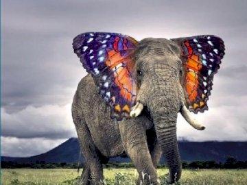 Ich bin ein Schmetterling. - Motylem jestem