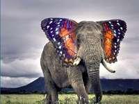 Eu sou uma borboleta