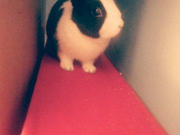 lapin - sur la photo mon lapin est présenté. Un chat rouge blanc et noir.