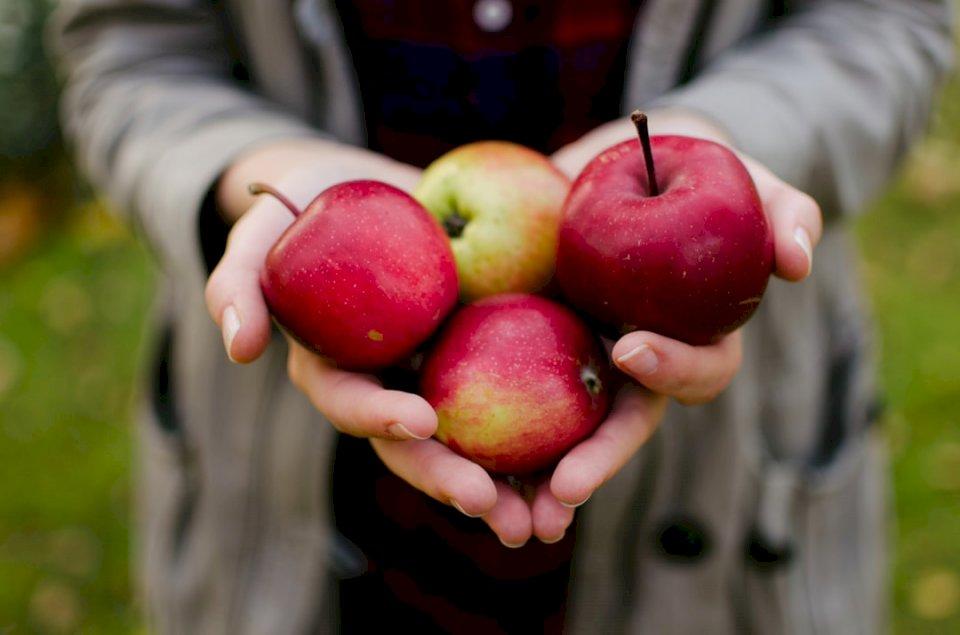 Det är dags för äpplen i Korpo!