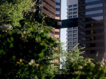 Innenstadt von Phoenix in der - Grüne Bäume nahe Hochhausgebäude während des Tages. Arizona. Ein großes Gebäude.