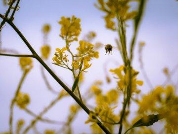 FLY - First Love Yourself - Micro microphotographie d'abeille planant près d'une fleur pétale jaune. Santa Bar