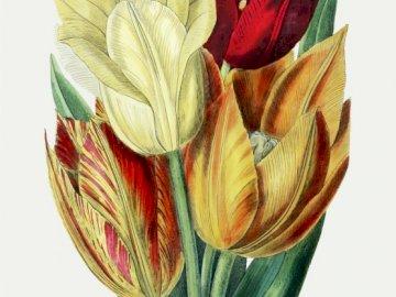 Rote und gelbe Tulpen - Bunte Tulpen, Frühlingsblumen. Eine Nahaufnahme einer Blume.