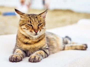kitty 123456789 - créé 0 11:15 07/05/2020. Un chat gisant sur le sol.