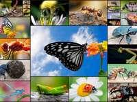 weide bewoners - Insecten op de weide: vlinder, kever, bij. Een close up van veel verschillende groenten te zien.