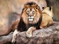 león león león león