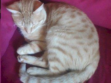 Chaton de Phaedra - Photo prise par Fedra. Un chat dormant sur un lit.