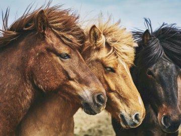 Ces photos proviennent de l'un des - Photographie de mise au point sélective de chevaux. Londres. Un gros plan d'un cheval.
