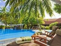 pool_palm_furniture