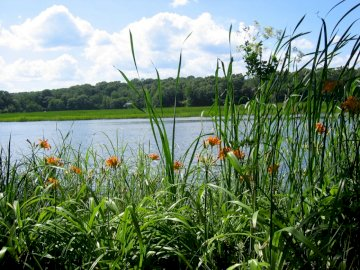 river_forest_grass_nature_ - river_forest_grass_nature_. A group of bushes in front of a body of water.