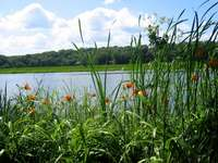 river_forest_grass_nature_