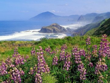 mountains_coast_sea_waves_flowers_greens_ - mountains_coast_sea_waves_flowers_greens_. Zbiornik wodny z górą w tle.