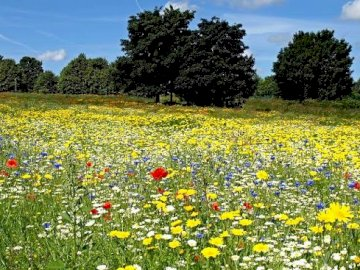Organisez les puzzles représentant la prairie - Organisez les puzzles représentant la prairie. Une fleur jaune dans un champ.