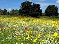 Arrange the puzzles depicting the meadow - Arrange the puzzles depicting the meadow. A yellow flower in a field.