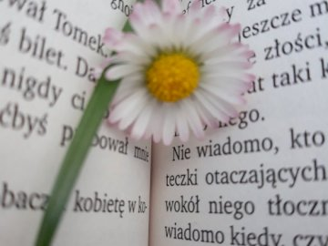 daisy - The picture shows a daisy on a book. A close up of text on a white surface.
